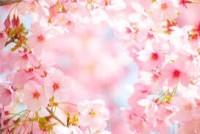 4月のスタッフのスケジュール(土日のご予約が大変取りづらくなっていますので、平日の夕方もおすすめです。)